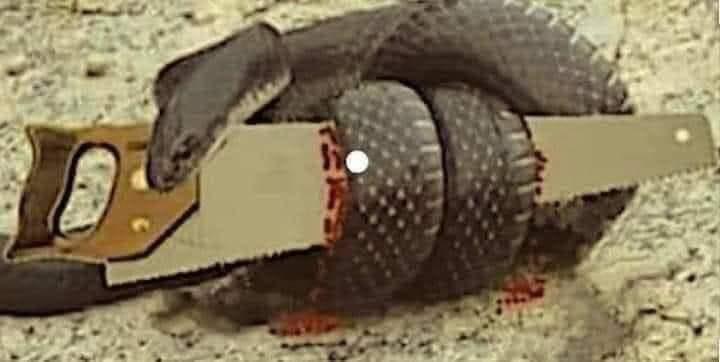 Priča jedne tvrdoglave zmije (OVO MORATE PROČITATI)