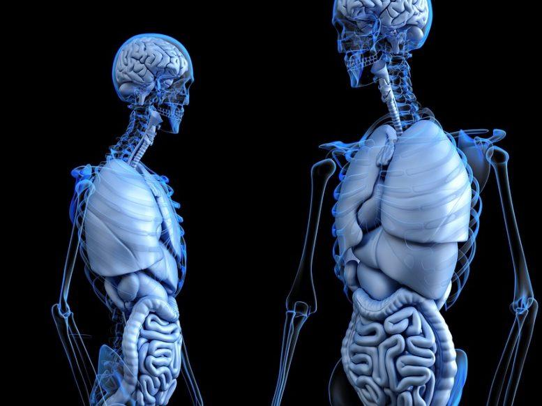 U ljudskom telu postoji 7 ORGANA bez kojih možemo da živimo