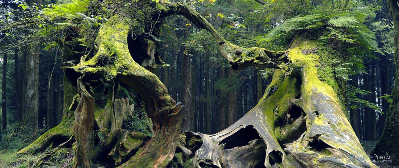 Hoia-Bacui šuma