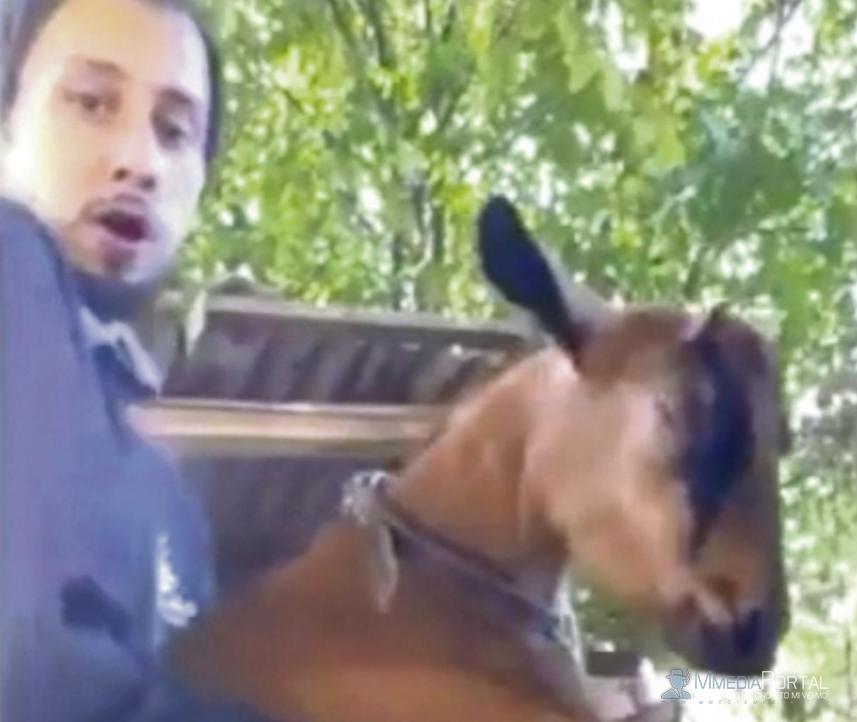 BIZARNO! Ovaj Beograđanin seksualno zlostavlja kozu, a radi sa decom kao animator?!